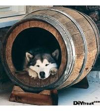 Masifart Şarap Fıçısı Köpek Klubesi